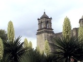 Mission San Jose through yucca blooms Stock Footage