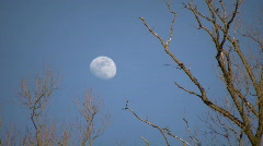 Stock Video Footage of The moon is visible amidst some sunlit trees (High Definition)