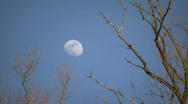 The moon is visible amidst some sunlit trees (High Definition) Stock Footage