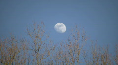 The moon is visible amidst some sunlit trees (High Definition) - stock footage