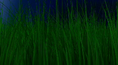 Grass pan over (no grow)  Stock Footage