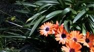 Flower-03 Stock Footage