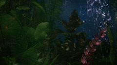 Aquarium Background (no fish) Stock Footage