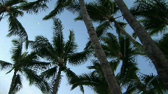 Hawaiian Palm Trees View From Below Stock Footage