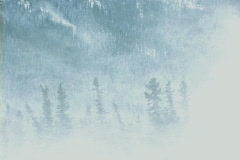 Snow blowing over forest 3 Stock Footage