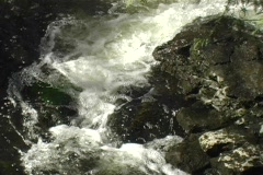 Hilton Falls and River Conservation Area - stock footage