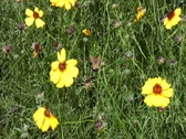 Butterfly on wildflower Stock Footage