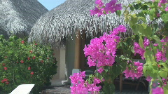 Bougainvillea and bungalows Stock Footage