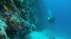 Diver with reef Stock Footage