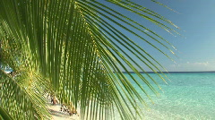 Palmleaf in the wind on a beach Stock Footage