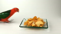 Funny - bird stealing potatoe chips Stock Footage