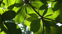 green foliage - stock footage