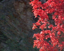 Fall Colors 12 - PAL Stock Footage
