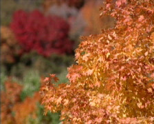 Fall Colors 16 - PAL Stock Footage