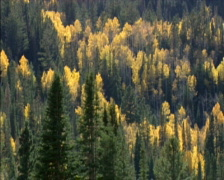 Fall Colors 20 - PAL - stock footage