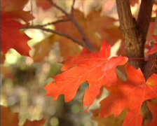 Fall Colors 40 - PAL Stock Footage