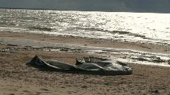 Kite on seashore - stock footage