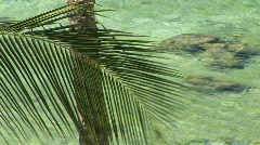 Palm Trees / Palm Fronds Blow in the Breeze in Front of Tropical Hawaiian Ocean - stock footage