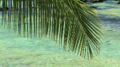 Tropical Palm Tree / Palm Fronds in Front of Turquoise Hawaiian Water Stock Footage