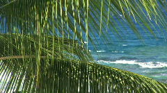 Palm Trees / Palm Fronds Sway in the Breeze in Front of Tropical Hawaiian Ocean Stock Footage