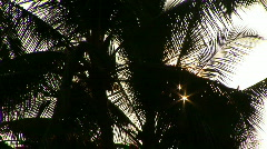 Backlit Palm Tree in Silhouette Sways in the Breeze on the Big Island of Hawaii Stock Footage