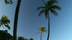 Palm Trees Against Blue Sky on the Big Island of Hawaii Stock Footage