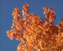 Fall Colors 64 - PAL Stock Footage