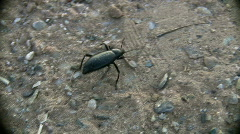 Crawling Black Bug Stock Footage