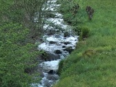 Stock Video Footage of Small rivulet
