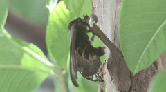 Butterfly Laying Eggs 2 Stock Footage