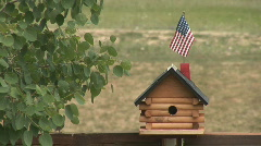 Birds at birdhouse - flying in and out Stock Footage