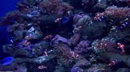 Sea15 Stock Footage