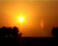 Sun setting between the trees Stock Footage