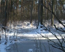 Winter forest 1 Stock Footage