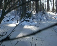 Winter forest 2  Stock Footage