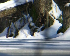 Winter forest 3  Stock Footage