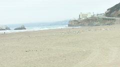 Unmoving Beach Bird Flock Stock Footage