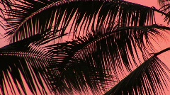Palm Fronds Against a Pink Sunset on the Big Island of Hawaii Stock Footage