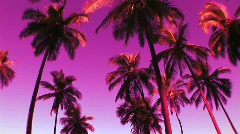 Colorful Pink Palm Trees in Hawaii Stock Footage