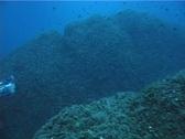 Underwater Cameraman 20 - PAL Stock Footage