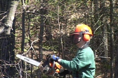 Man safely limbing tree with chainsaw 2 Stock Footage