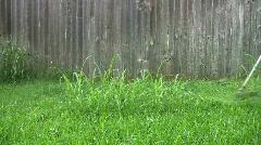 Weed cutting yard HD - stock footage