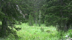 Mountain forest meadow pines HD Stock Footage