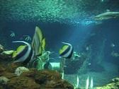 Aquarium04a Stock Footage