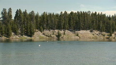 Pelican in Yellowstone National Park Stock Footage