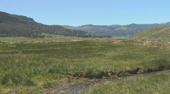 Lamar Valley in Yellowstone National Park Stock Footage