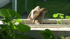 Feeding young sparrow 5 Stock Footage