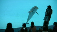 Porpoise trainer and kids at aquarium HD Stock Footage