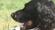 Alert dog Stock Footage