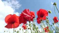 Poppies against cloudy sky Stock Footage